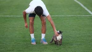 "Котка ""на проби"" в руски тим"