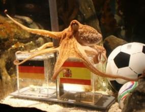 Октоподът Паул позна победата на Испания (видео)