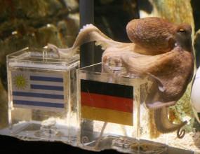 Не вярвайте на октопода, призова южноафриканският президент