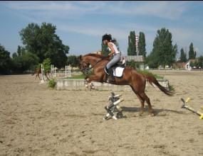 Състезатели от 42 клуба по конен спорт взеха участие в държавните финали