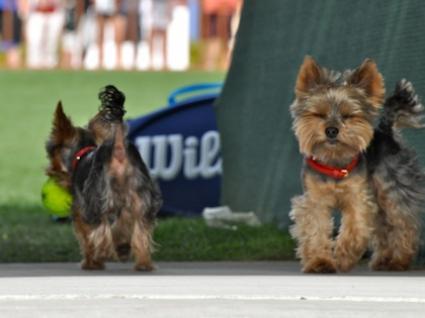 Тенис и кученца в Индиън Уелс (снимки)