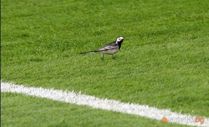 Чакат пълен стадион на Ботев (Гълъбово) - Верея
