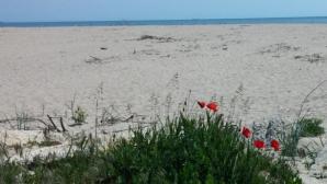 """На 31 май ще се проведе полумаратонът """"Камчийски пясъци"""""""