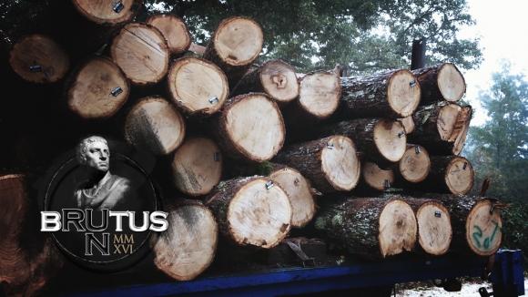 60 смелчаци ще мерят сили в екстремно приключенско състезание край Варна