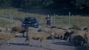 Павел Лефтеров и Дизела в уникално състезание помежду си