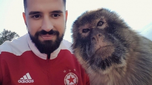 ЦСКА-София разпусна при маймуните в Гибралтар