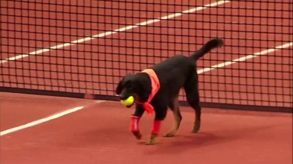 Отново кучета ще гонят топките на турнир в Бразилия (видео)