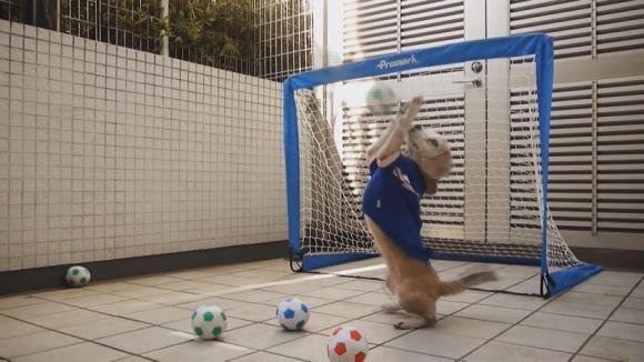 Куче демонстрира вратарски умения