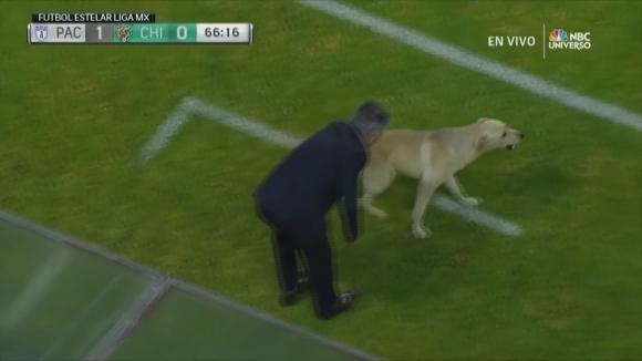 Куче и котка прекъснаха мач в Мексико