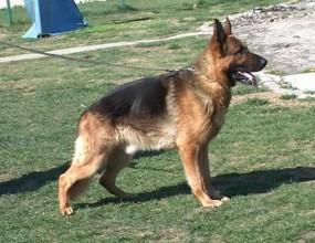 Полицейски кучета ще охраняват публиката на спортни събития в Гърция