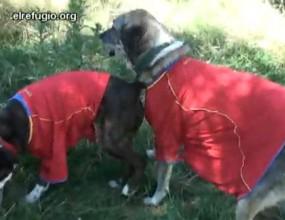 """В Испания дори бездомните кучета подкрепят """"Ла Роха"""" (видео)"""