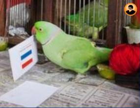 Папагалът Мани каза своята дума: Холандия шампион!