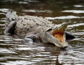 След октоподът Паул и крокодил предрече титла за Испания
