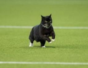 Котка развесели зрителите на мач в Холандия (видео)