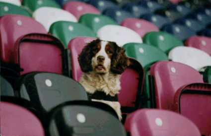 В Германия ще ходят с кучета на мач