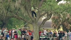 Тарзан играе голф (видео)