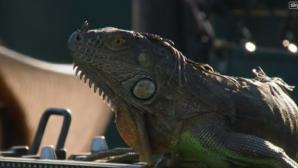 Неканен гост прекъсна мач от турнира в Маями (видео)