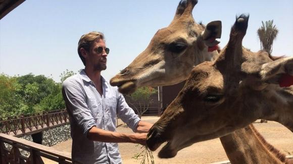 Крауч се снима с жирафи