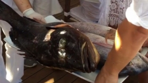 Спас Русев хвана големи риби в тузарски курорт (снимка)