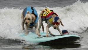 Кучета на сърф