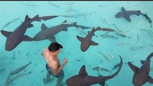 Михаил Александров плува с акули