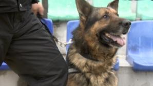 Запознайте се с Бруно или как полицията опази дербито (видео)