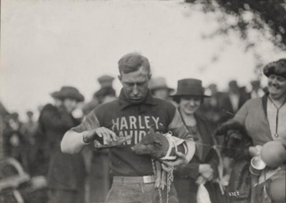 Harley-Davidson и прасето