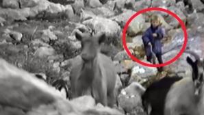 Вижте как 5-годишният Лука Модрич... пасе кози (видео)