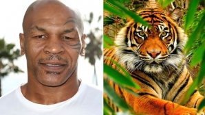 Майк Тайсън за тигрите, наркотиците и известността (видео)
