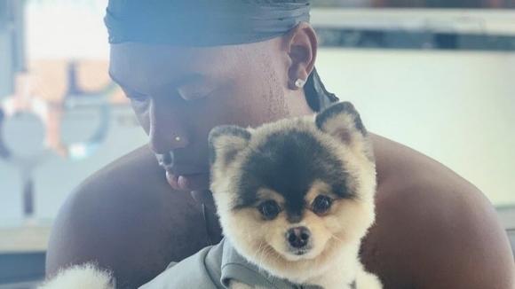 Щастлива развръзка за Стъридж - върнаха му кучето