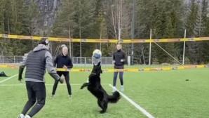 Киара - кучето, което играе волейбол неочаквано добре (видео)