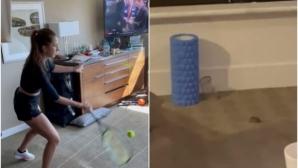 Потрес: мишки в стаите на карантинираните тенисисти в Мелбърн (видео)