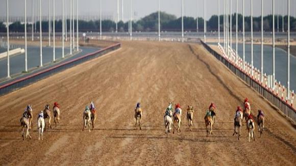Без публика и на състезание с камили